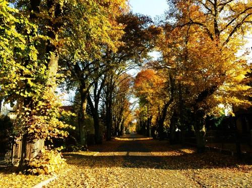 Lipowa jesienią