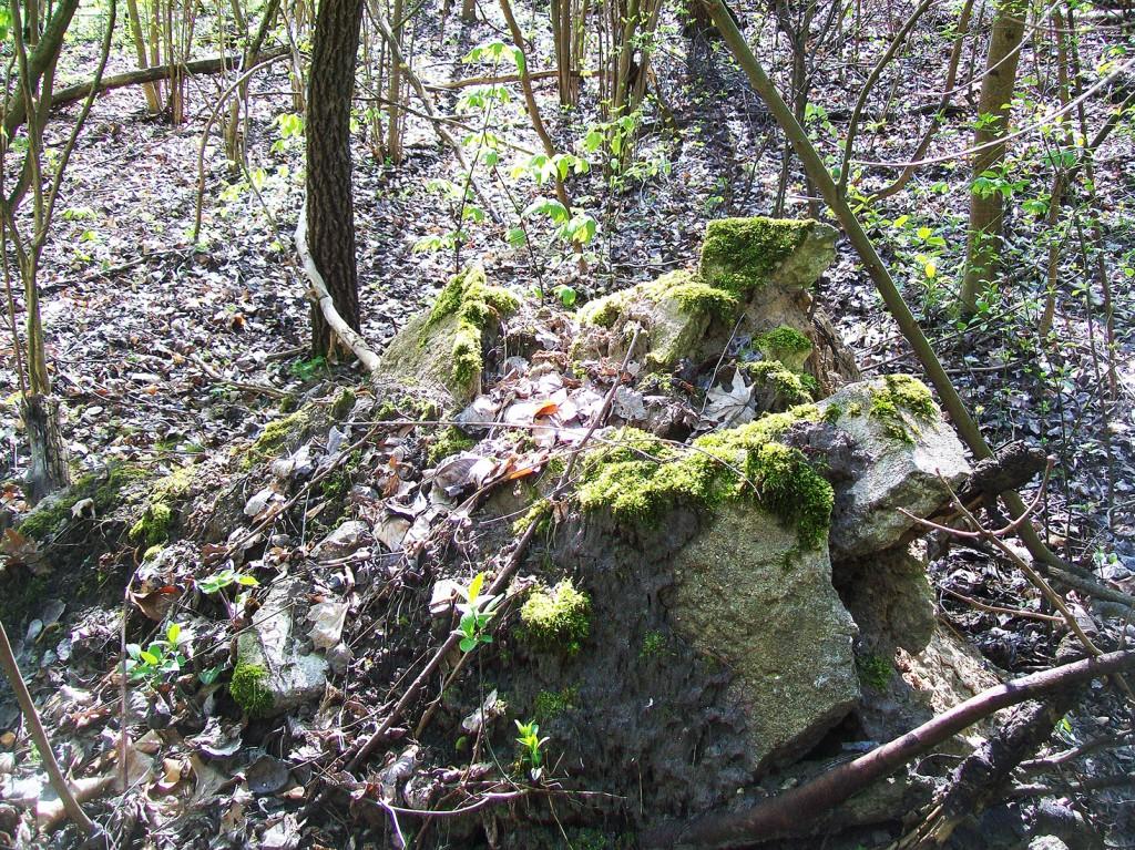 beton przy korzeniach drzewa na Przecznicy