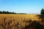 pole na Górnym Puszczykowie